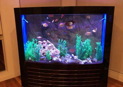 Fish tank display