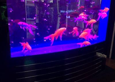 Huge Acrylic Aquarium