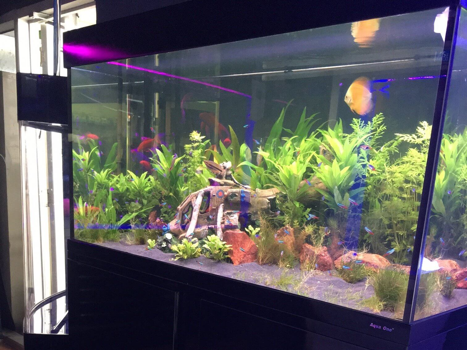 how to keep your fish tank water crystal clear