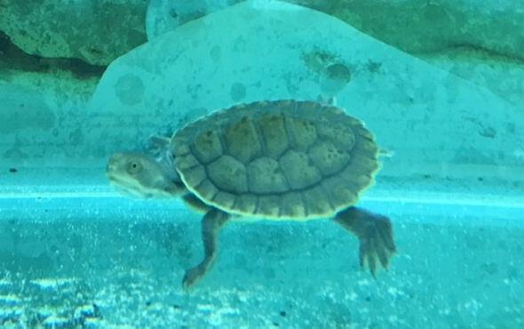 Turtles Melbourne in Turtle Aquarium