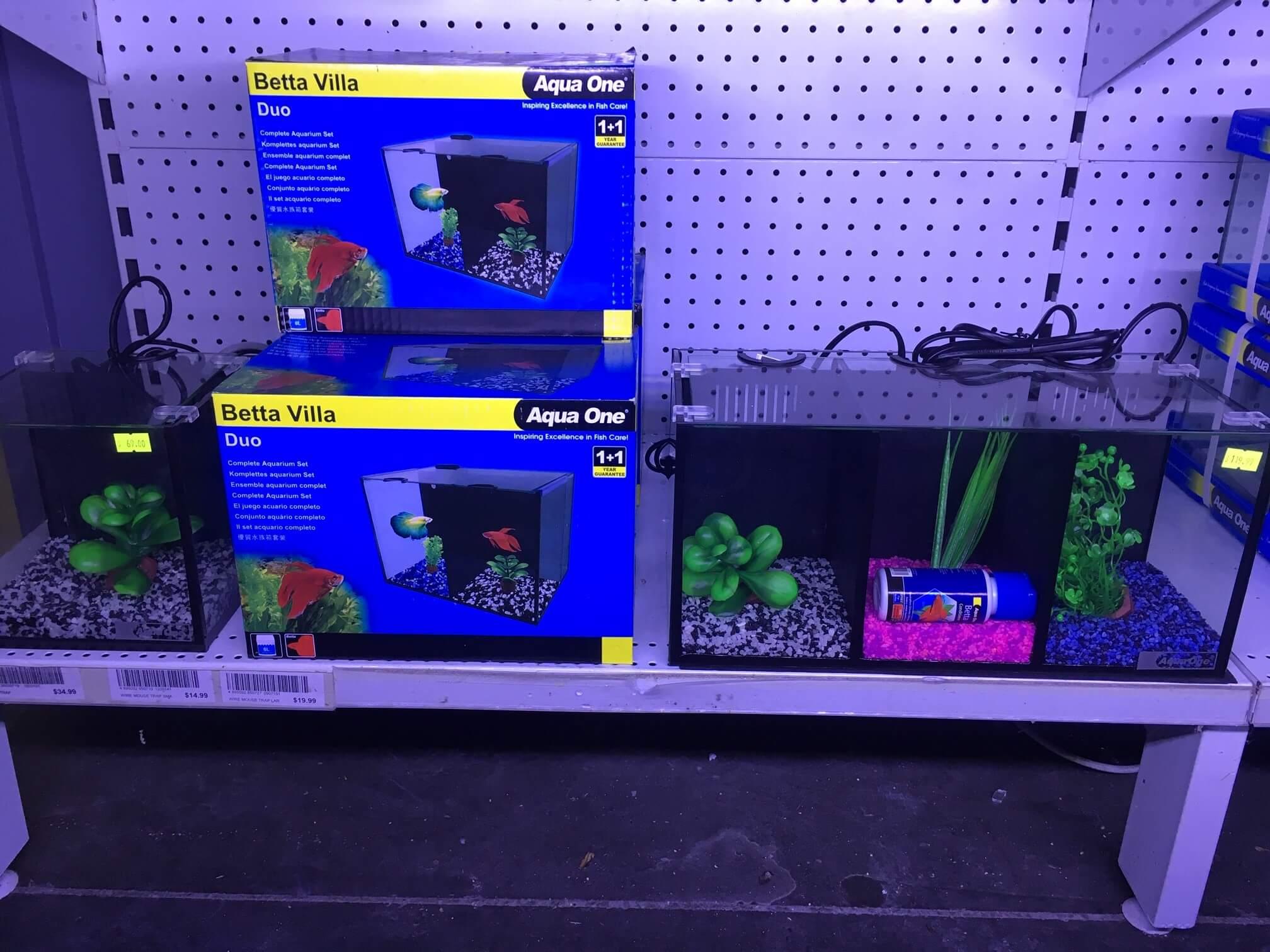 Betta Fish Tank Melbourne | Betta Villa Aqua One